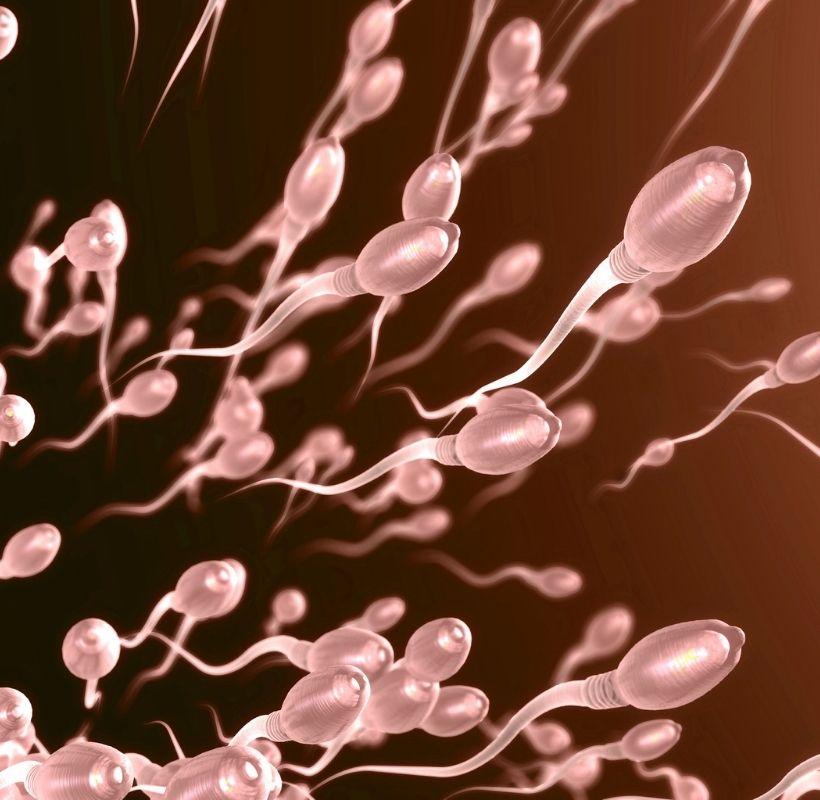 meni nedir - meni ile sperm arasındaki fark nedir
